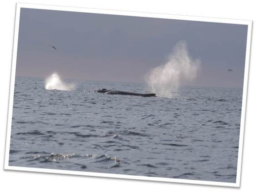 Whale spouting water